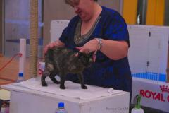 BCCNZ South Island Cat Show 2021