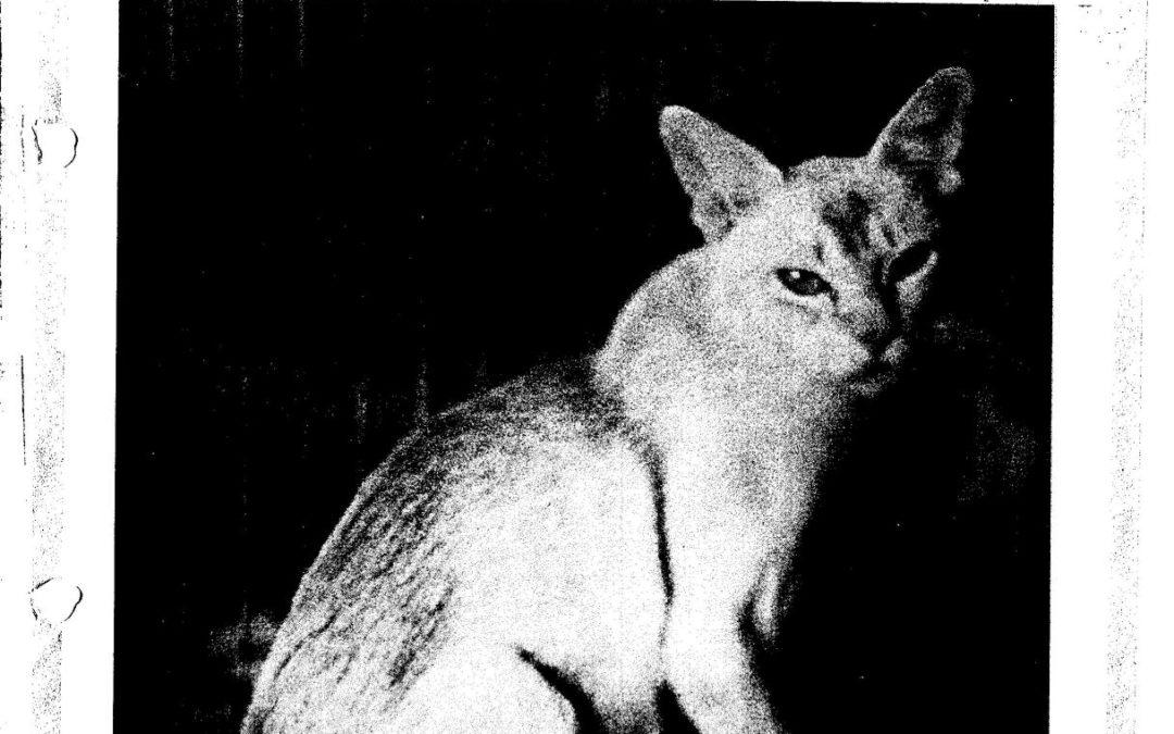Glen Hodgman Author At Burmese Cat Club Of New Zealand