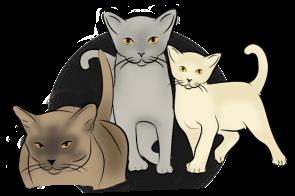 Burmese Cat Club Home Burmese Cat Club Of New Zealand