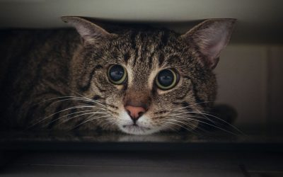 Cat Stress – How Stress Affects your Cat